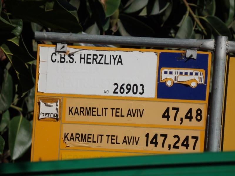 На курсах в Израиле в середине осени (Тель-Авив - Яффо, Герцлия, Иерусалим)