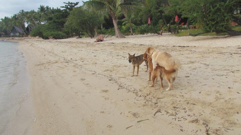 Ноябрьские вечера на хуторе близ Акиры, а также несколько не(а может)срущих на пляжах Ко Липе собак