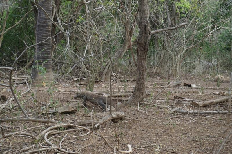 Комодо в ноябре 2017