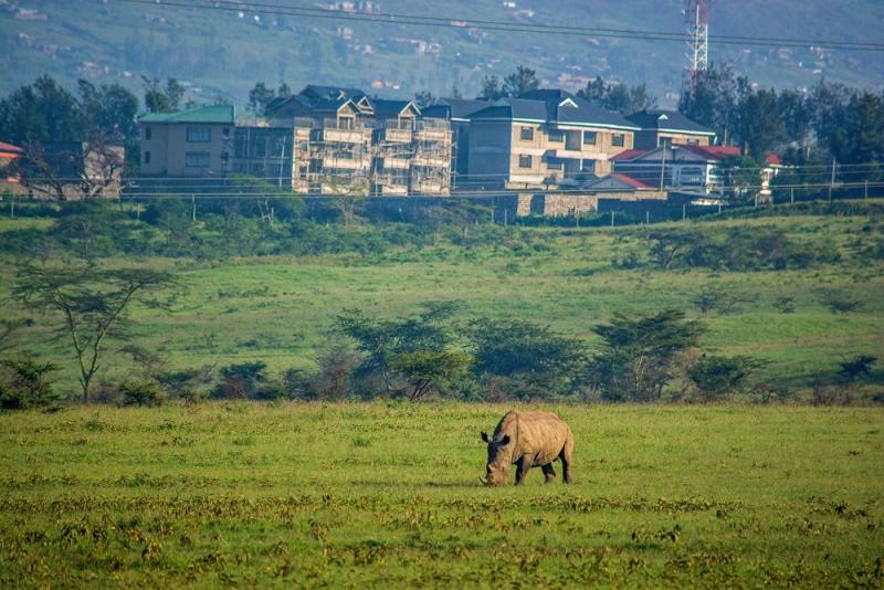 Сафари в Кении, пляж в Танзании