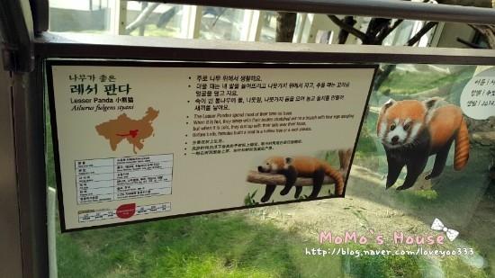 Есть ли панды в зоопарке Сеула?