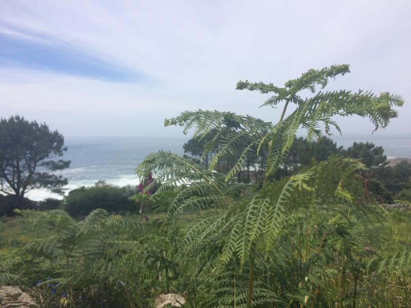 Camino Portugues по побережью, апрель-май 2017
