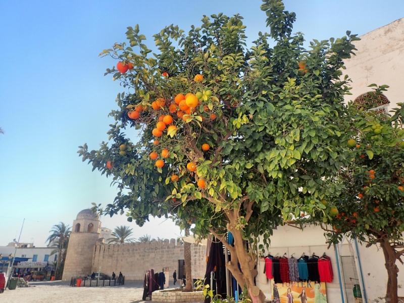 Набег на Тунис в новогодние праздники.