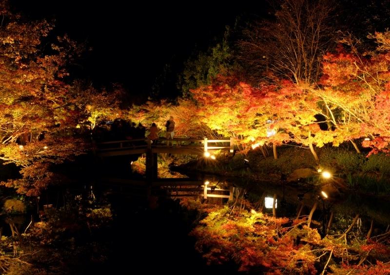 Лучшие достопримечательности Японии в сезон красных листьев 2015 Tokyo-Nagoya(Obara,Korankei)-Kyoto-Nara-Osaka