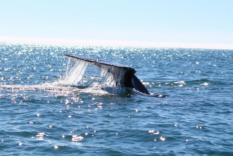 Погладить китов в лагуне Сан-Игнасио