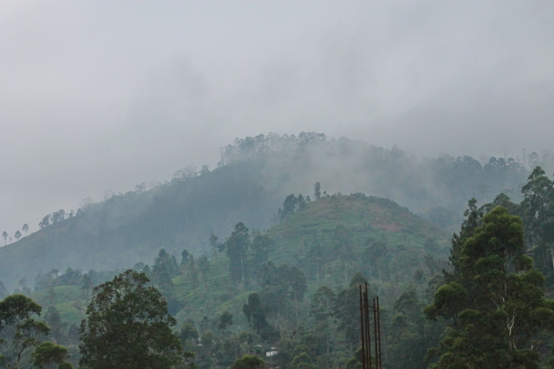 Шри Ланка 2018.(январь февраль). Обзор поездки + много фото.. Негомбо - Канди - Пик Адама - Элла - Тангалле