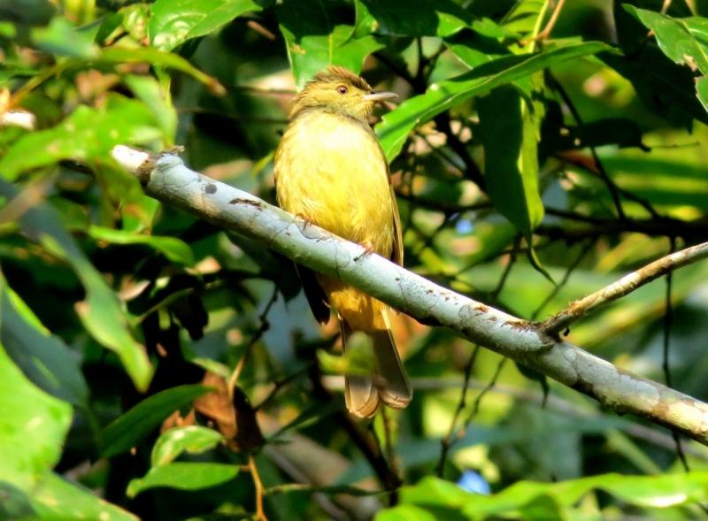 Таиланд. С фотоаппаратом за синей птицей (февраль-март 2018)