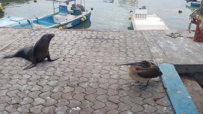 Галапагосские острова - жемчужина Эквадора