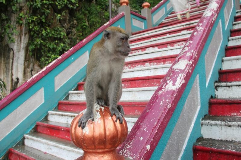 Тиоман – Перхентианы – Реданг – Куала-Лумпур