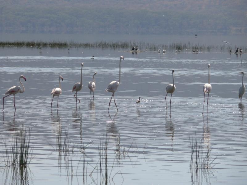 Путешествие вокруг озера Виктория и не только.