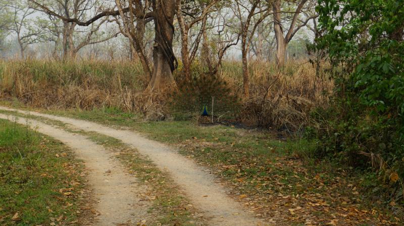 Bhimthang trek или альтернатива ABC для первого трека + Покхара и нац. парк Читван