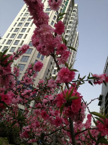 Весна 2018: Токио (немножко) - Филиппины (Себу-Бохол) – Шанхай – Сучжоу - Пекин.