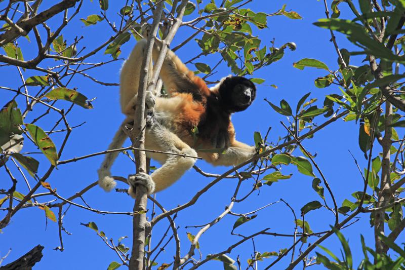 Мадагаскар 2018- Рывок на север, Янтарная гора