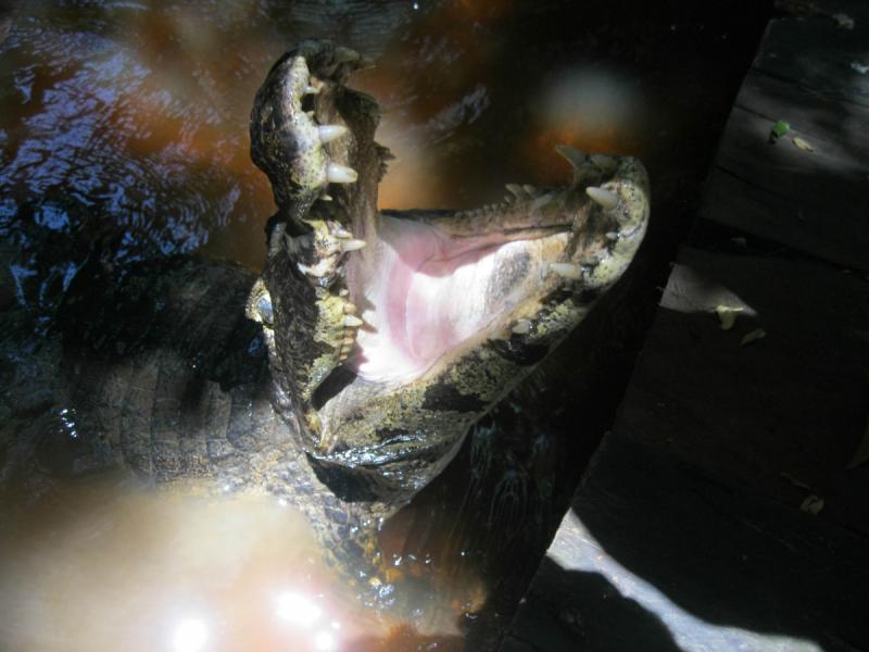 Игуасу – Оруро – Рурренабаке, февраль