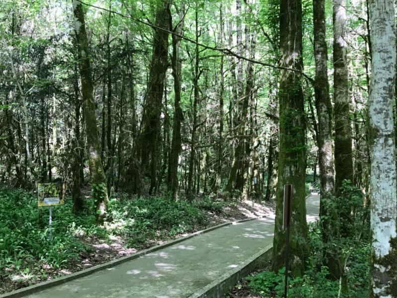 Сочи в первый раз в 42 года: 8 дней в апреле 2018 Адлер-Сочи-Рица-Афон-Горы