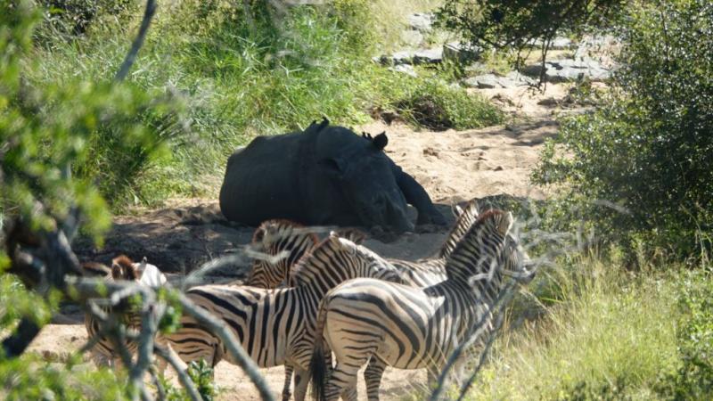 Первомай в Южной Африке или как мы искали льва Бонифация
