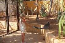 Касатки, лемуры и прочие прелести Тенерифе