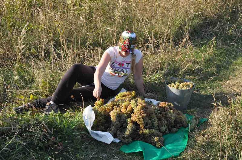 Праздник сбора винограда в Грузии - Ртвели. Как это было?