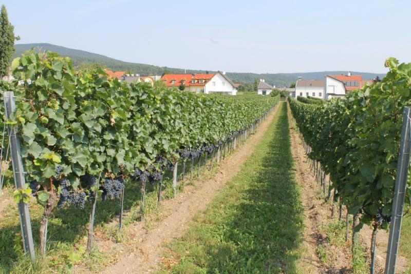 Снова пиво, термы и релакс (Хорватия, Австрия, Германия) август 2018