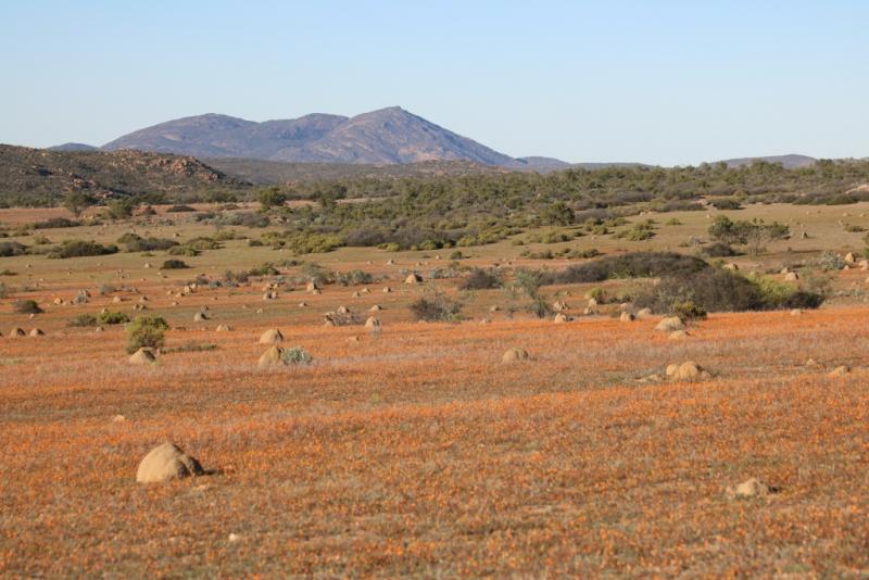 Desperate Campers in Africa (или впервые в Африке с палаткой - Намибия, ЮАР и немного Ботсваны и Зимбабве)