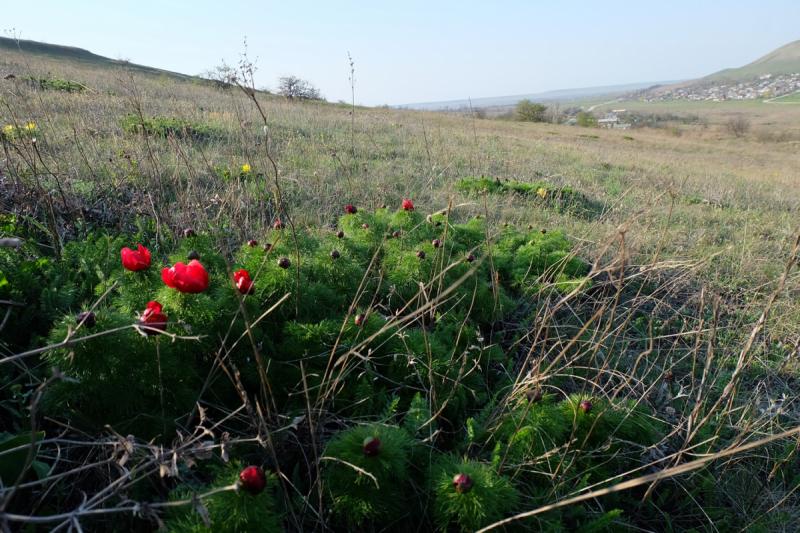 Мой Апрельский Крым