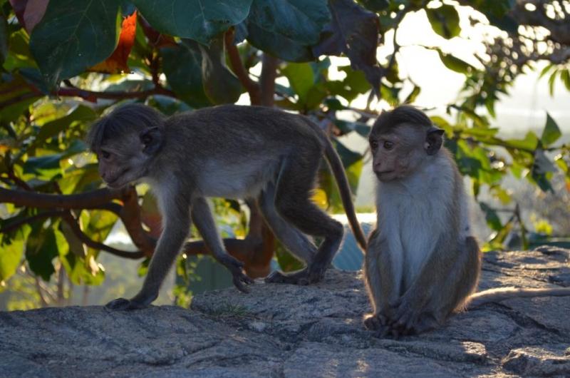 Шри-Ланка 2018 без авто на 2 недели. Одно из лучших путешествий!