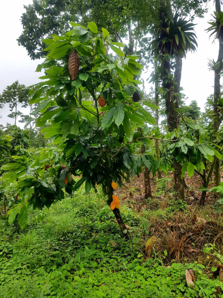 Коста Рика - Ноябрь 2018