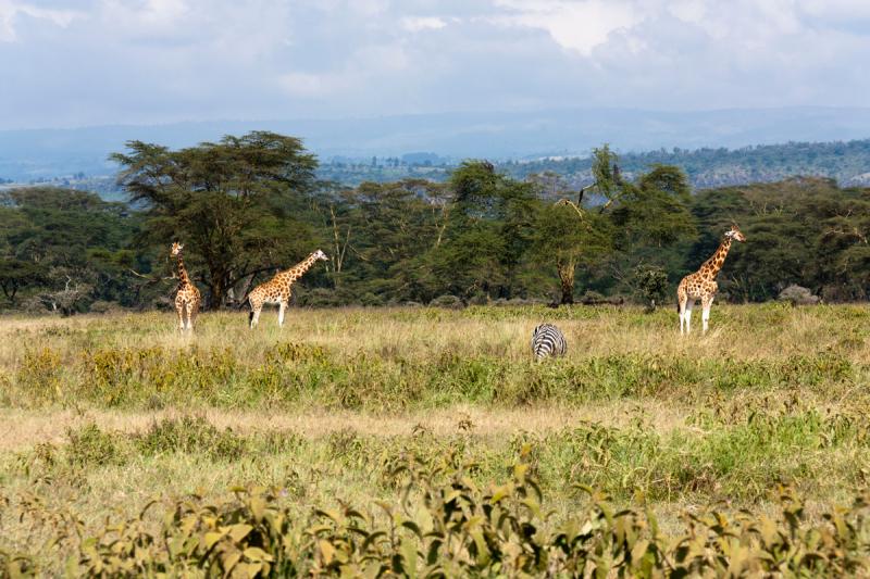 Соло по Кении. Путешествие моей мечты