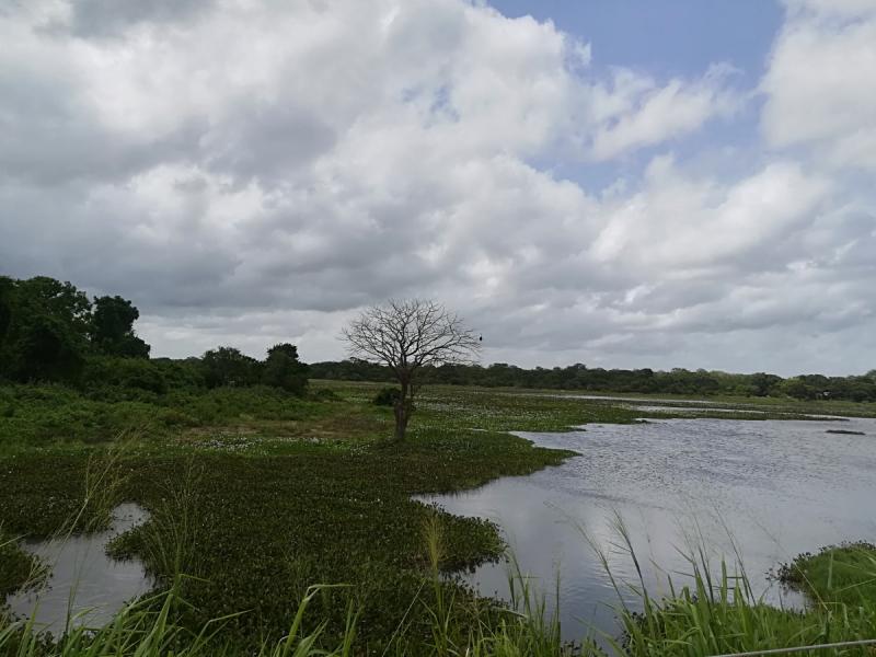 Незабываемая Шри-Ланка в июне 2018