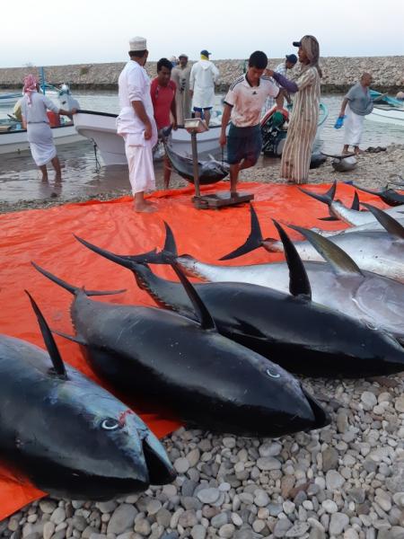 8 новогодних дней в Омане, селф кемпинги на побережье