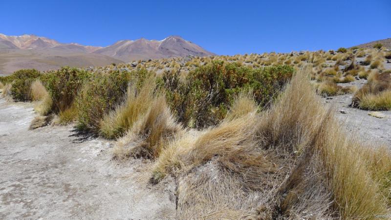 Боливия обыкновенная (Ноябрь 2018 года)