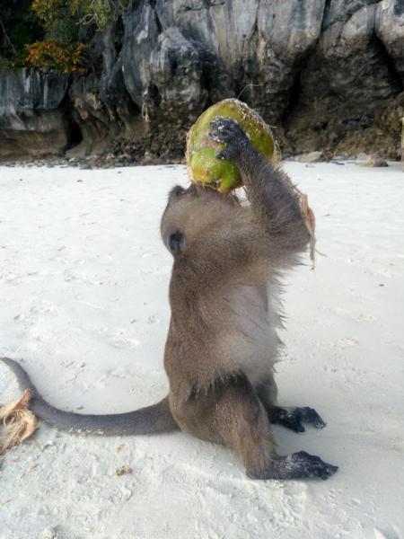 Краткий отчет о байдарочном походе по Андаманскому морю.