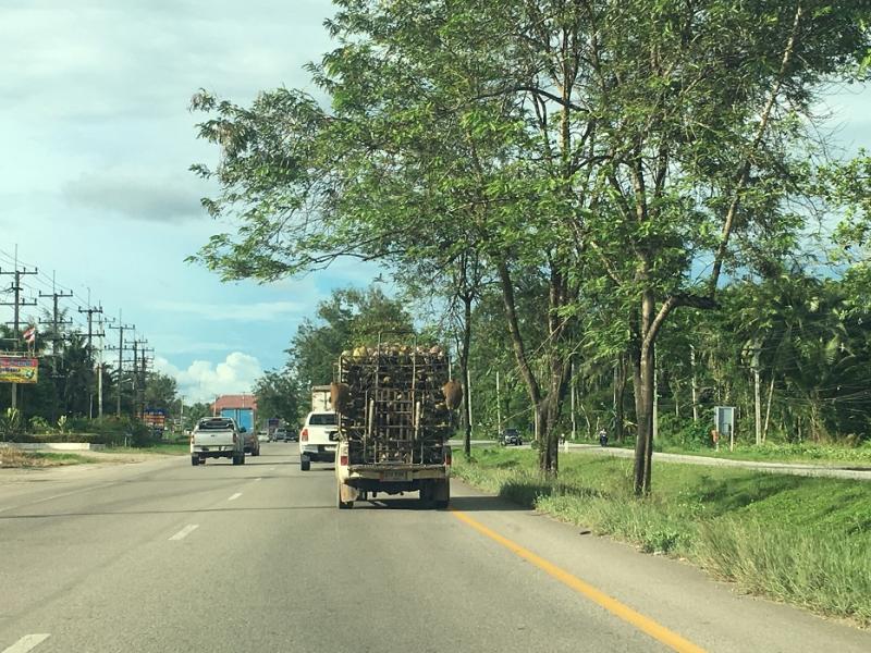 На машине по Тайланду с тремя детьми, октябрь 2018г