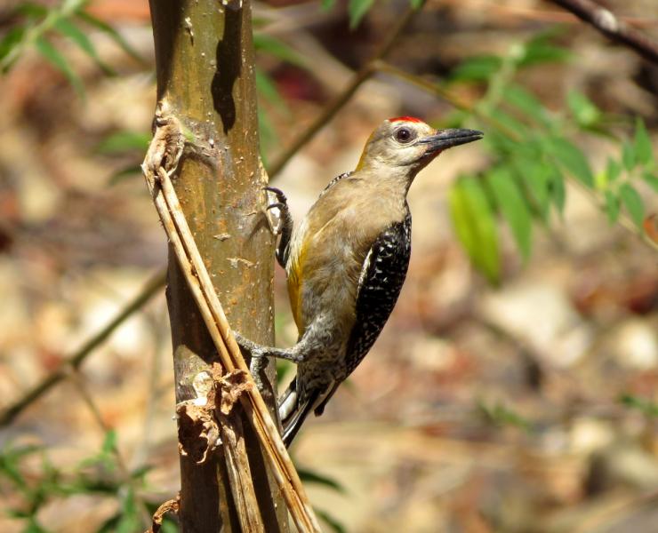 Никарагуа, в натуре! Заметки о природе (март 2019)