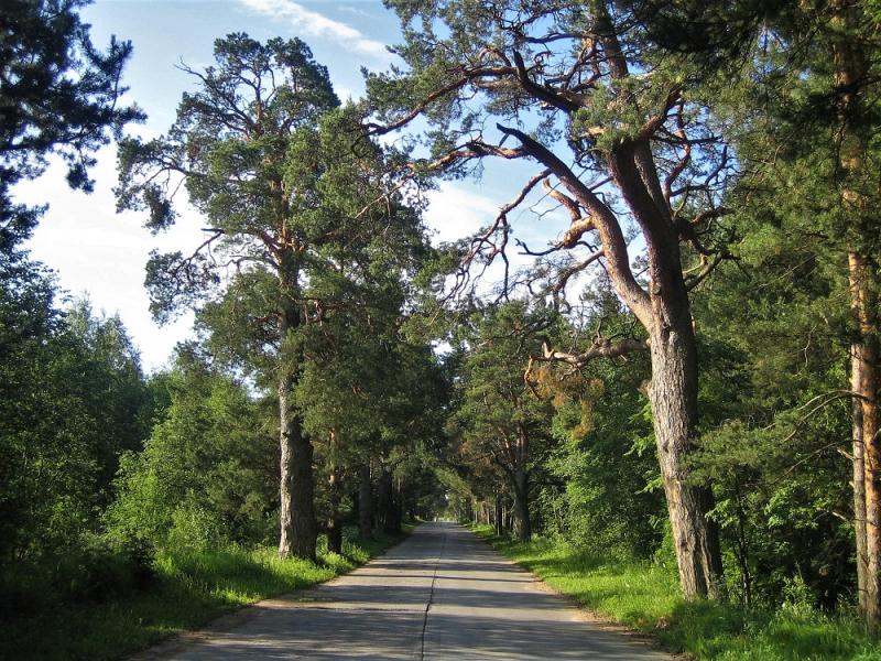 Двести тринадцать дорог пройти и понять… (Путешествие в Италию июль-август 2018)