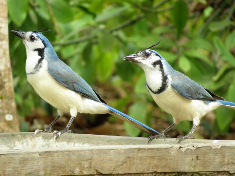 Гватемала, в натуре! О птичках и прочей живности (январь-март 2019)