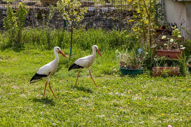 Эльзас и Шварцваальд на пасхальные праздники