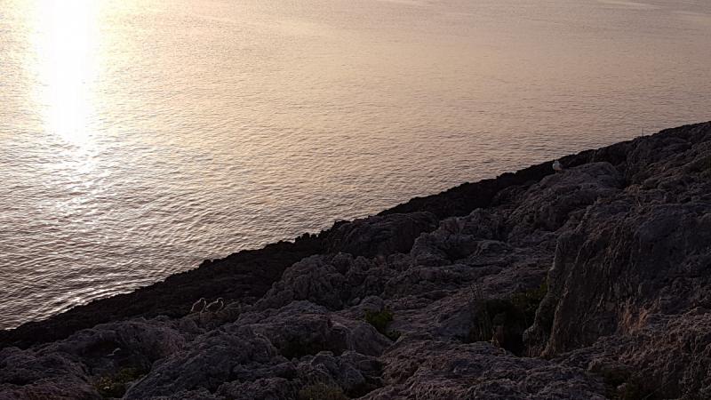 Острова Тремити. Сан-Домино (июнь 2019)
