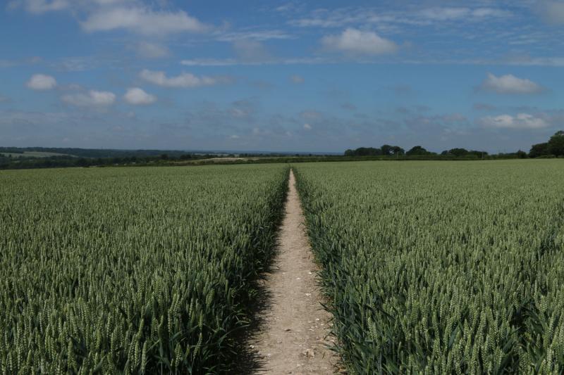 Один день по Via Francigena: Canterbury-Dover