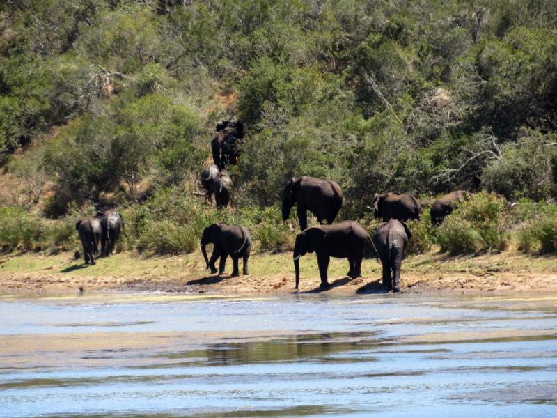ЮАР. Кейптаун, Сафари в Shamwari и Pumba, Дорога садов