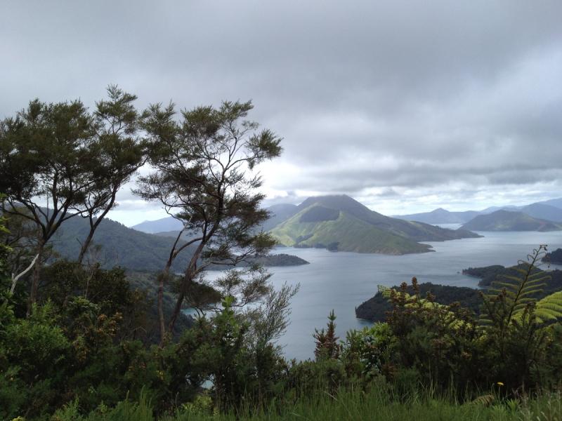 Как я уехал в Австралию и стал оружейным дилером в Новой Зеландии