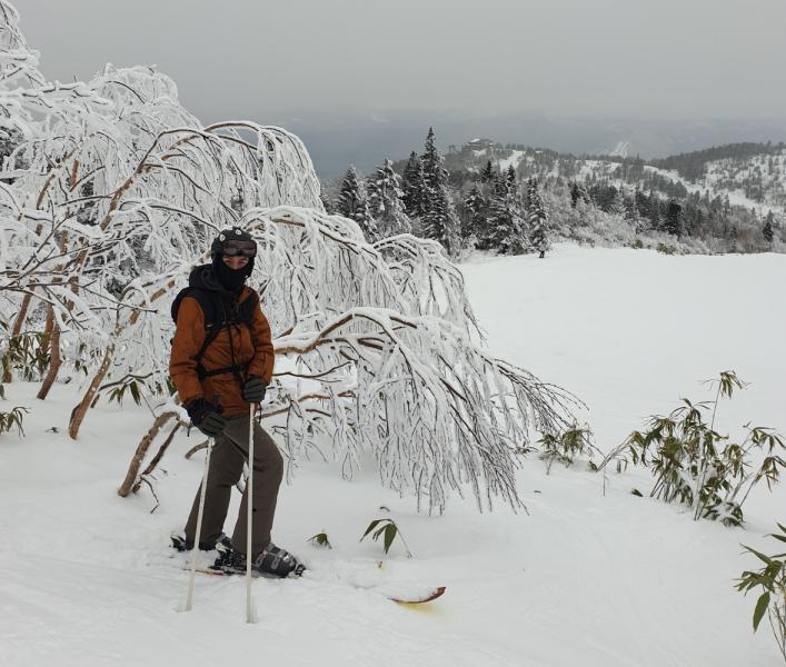 Токио и лыжи в Shiga Kogen в январе