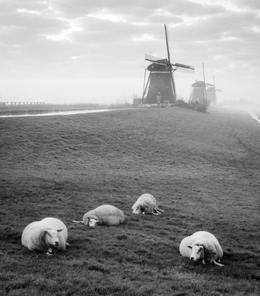 Акуна Матата по-нидерландски, или куча поводов держать трубой хвост