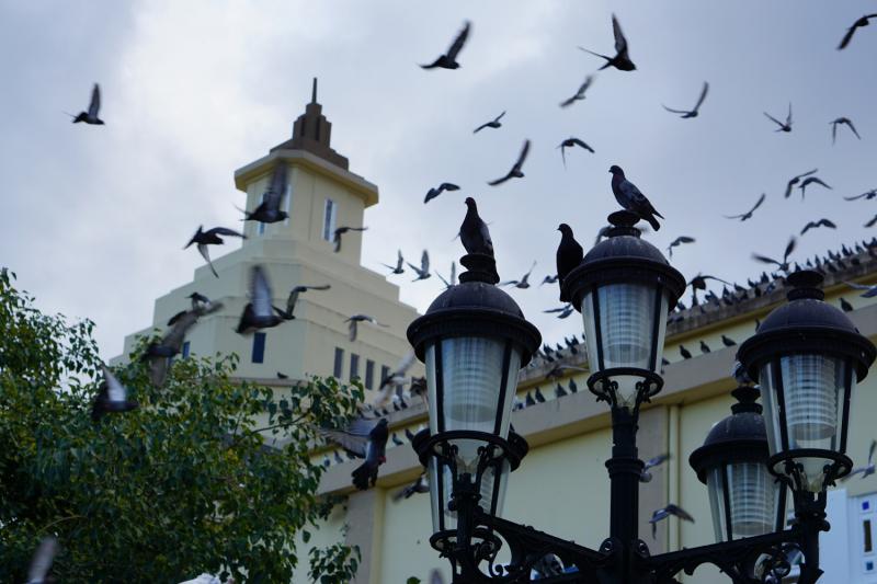 Доминикана, ноябрь-декабрь 2019
