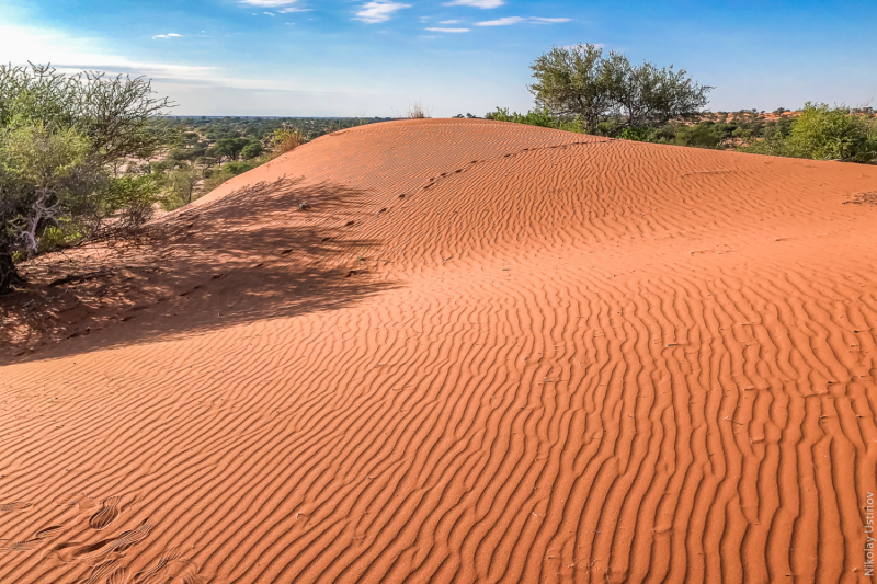 Намибия. Оранжевое настроение под ярко-голубым небом пустыни