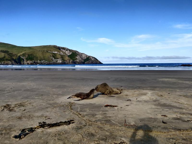 Январь 2020: 2 острова, 20 дней, Новая Зеландия для неторопливых