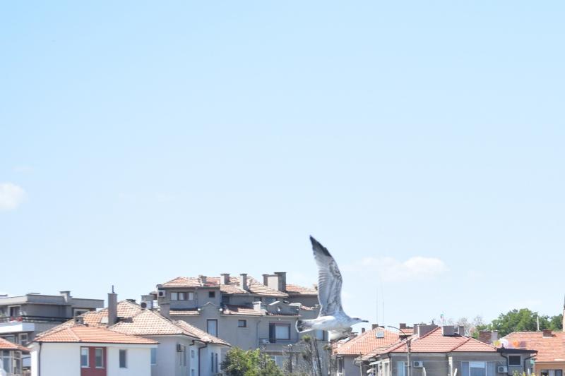 Болгария(Св Влас, Поморье, Обзор, Пловдив)-Албания(Ксамиль, Берат)-Охрид-Пелеш 2019