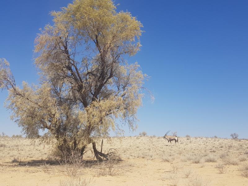 Kgalagadi Transfrontier Park South Africa как где что почем
