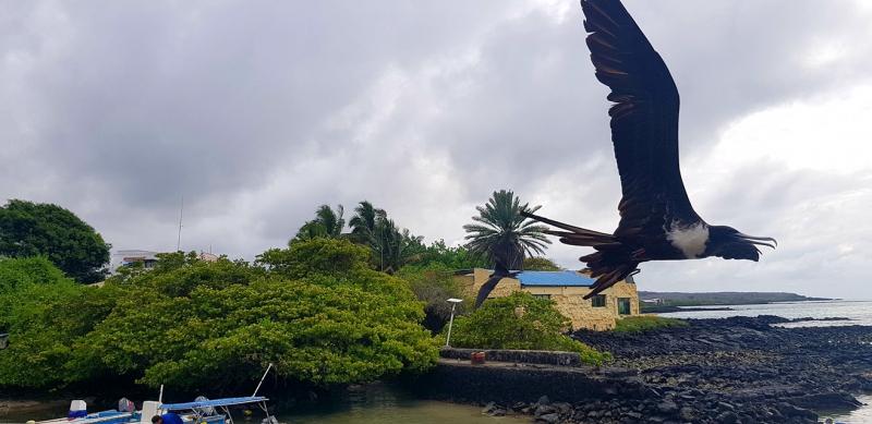 Галапагосские острова, Новый 2020 год, 1800 долларов на все, включая перелеты из Москвы - это реальность