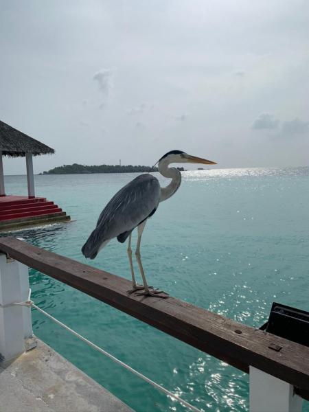 Остров Бодуфолуду (Bodufolhudhoo) февраль 2020